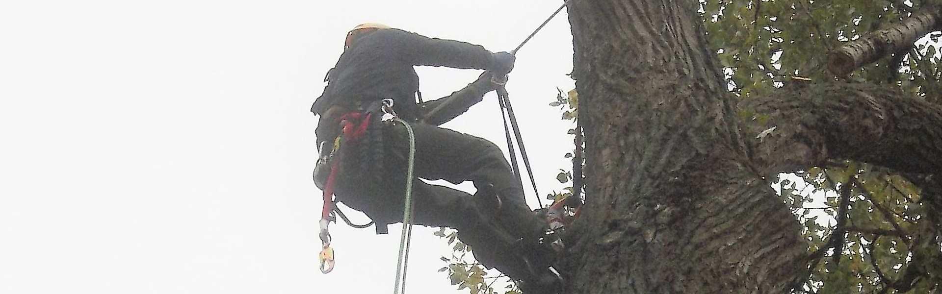 Wycinka i pielęgnacja drzew na wysokości